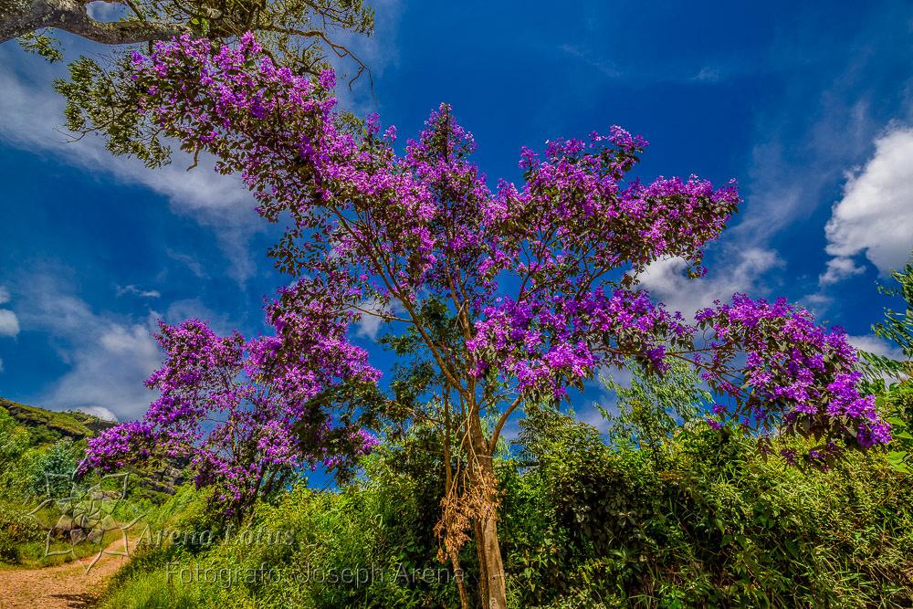 vale-matutu-aiuruoca-viagem-trip-serra-papagaio-joseph-arena-lotus-arenalotus-fotografo-photographer-fotografia-photography-049