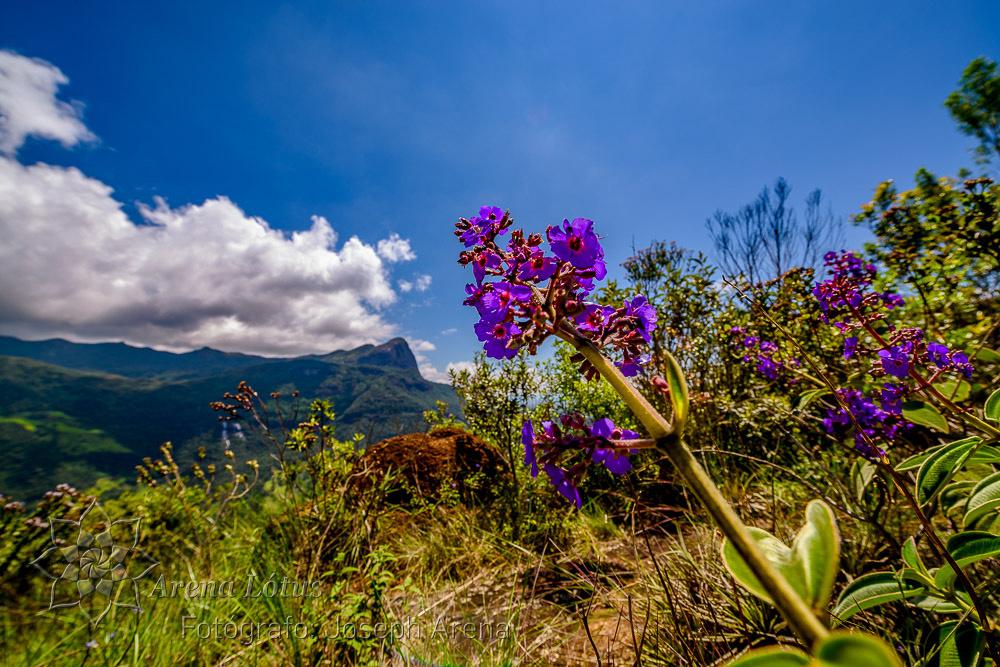 vale-matutu-aiuruoca-viagem-trip-serra-papagaio-joseph-arena-lotus-arenalotus-fotografo-photographer-fotografia-photography-033