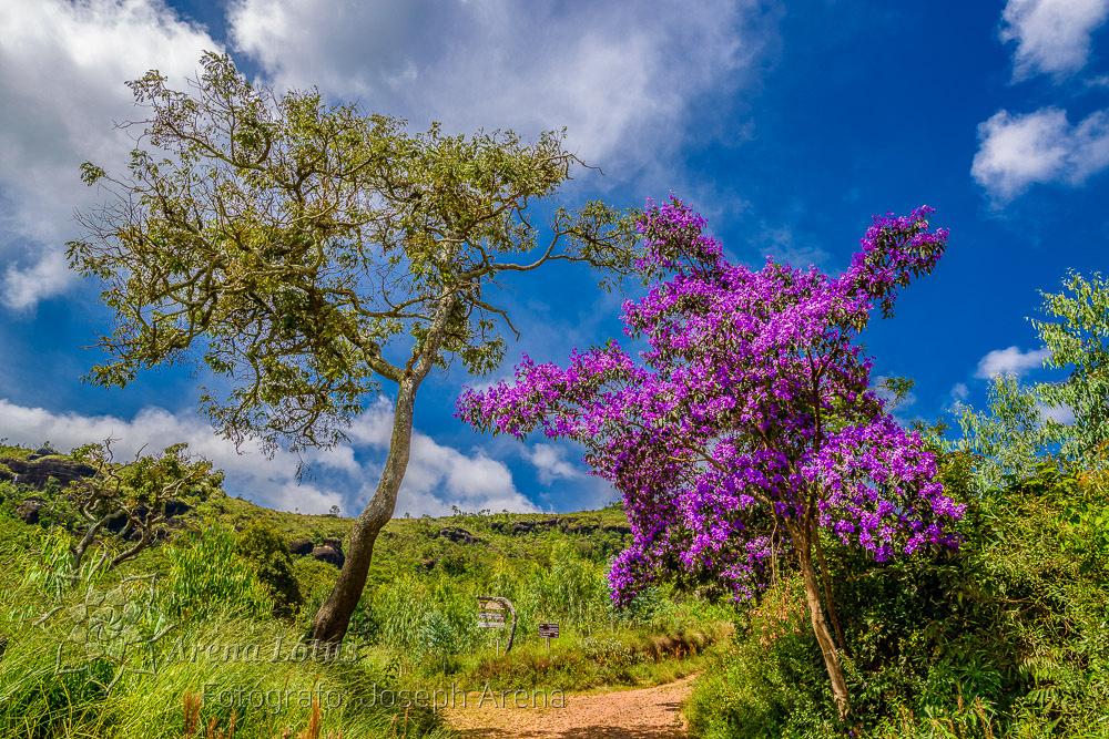vale-matutu-aiuruoca-viagem-trip-serra-papagaio-joseph-arena-lotus-arenalotus-fotografo-photographer-fotografia-photography-050